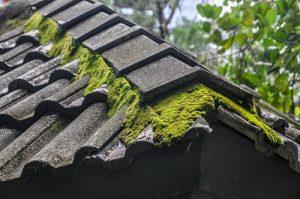2019 Kosten Groendak Kosten Dakdekkernl